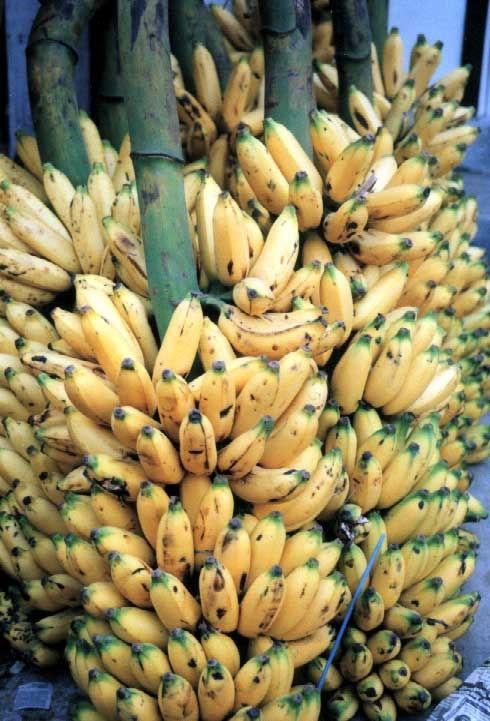 bananas1_jpg